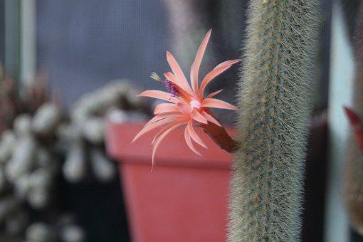 Flower, Cactus, Green, Plant, Garden, Nature
