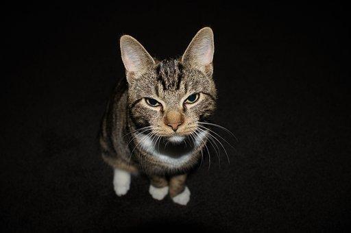 Cat, Close Up, View, Kitten, Face, Animal Portrait