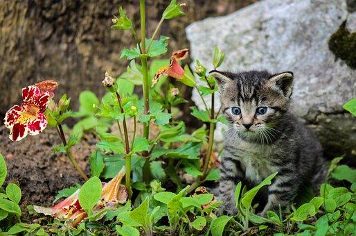 Kitten, Cat, Kitty, Cute, Feline, Pet, Fauna, Player