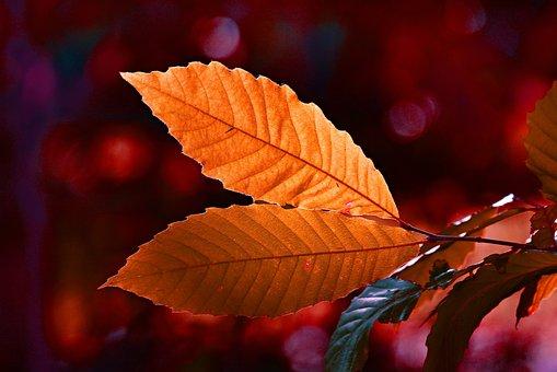 Leaf, Twig, Autumn Color, Vein, Pattern, Back Light