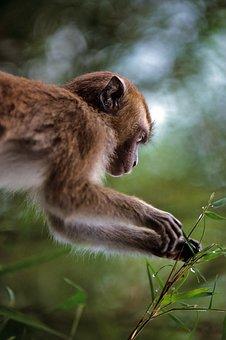 Monkey, Nature, Animal World, Mammal