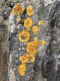 Lichen, Nature, Rock, Moss, Summer, Outdoor