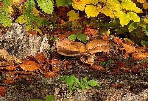 Forest, Mushroom, Autumn, Moss, Nature