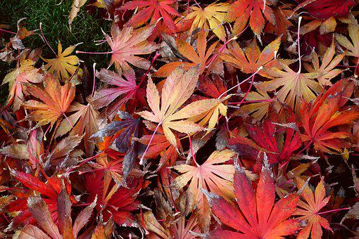 Foliage, Clone, Colorful, In The Fall, Nature, Red