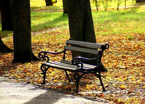 Bench, Park, Rest, Autumn, The Stage, Sit, Tree