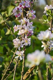 Bed, Garden, Plant, Nature, Flowers, Flora, Purple