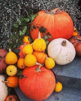 Pumpkins, Pumpkin, Halloween, Nature, Harvest