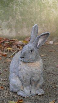 Rabbit, Rodent, Animal, Mammal, Pet, Ears, Nature, Fur