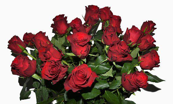 Roses, Bouquet Of Roses, Red Roses, Bouquet, Love