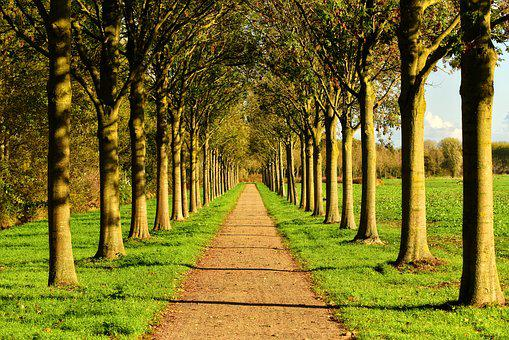 Lane, Tree, Tree Lined, Row, Road, Countryside, Rural