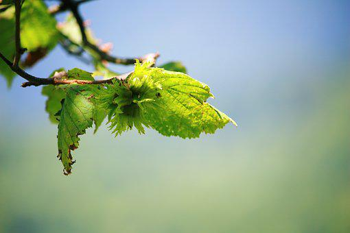 Green Leaves, Spring, Leaves, Green, Nature, Plant