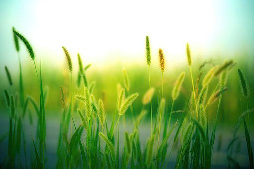 Grass, Grasses, Nature, Landscape, Meadow, Summer