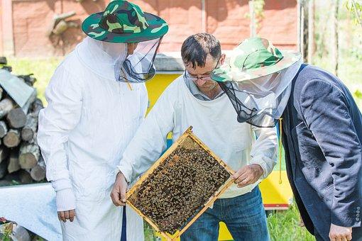 Bee, Beekeeper, The Hive, Beekeeping, Queens