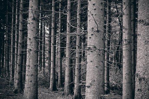 Forest, Trees, Landscape, Nature, Autumn, Mystical