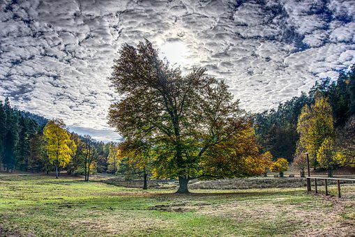 Autumn, Trees, Sky Clouds, Mood, Sun, Backlighting