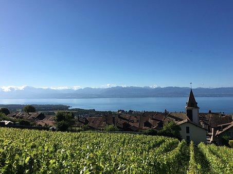 Bougy-villars, Vines, Lake Geneva, Vineyard, Landscape