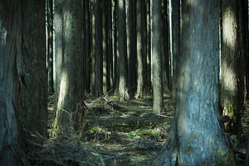 Forest, Wood, Sunbeams, Natural