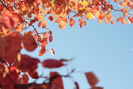 Autumn, Fall, Leaves, Blue Sky, Ad Space