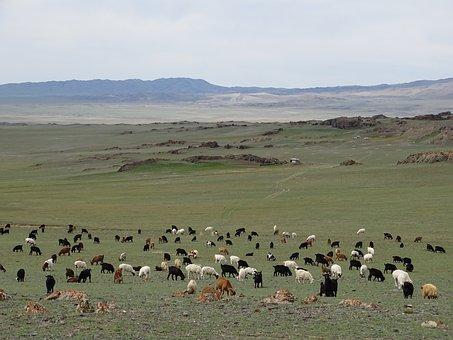 Mountains, Alpine Meadow, Pasture, Herd, Sheep