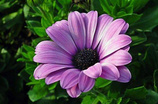 Flower, Violet, Autumn, Blooming, Garden, Nature