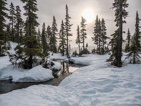 British Columbia, Canada, Fir, Forest, Mount Washington
