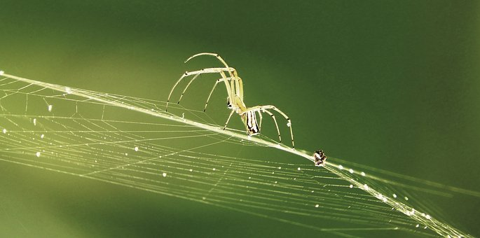 Nature, Spider Weaver, Arachnid, Colombia