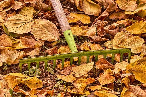 Autumn, Gardening, Computing, Leaves, Colorful, Garden