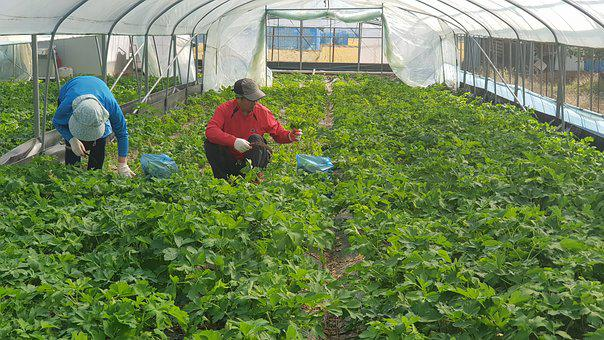 Windproof, Herbs, Vegetables, Work, Leaf, Delicious