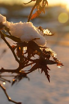 Snow, Winter, Droplets, Cold, Wintry, Trees, Outdoors
