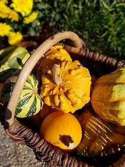 Coloquinte, Basket, Pumpkin, Fall, Harvest, Orange