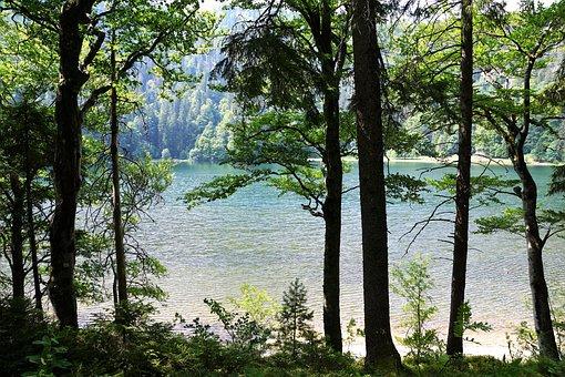 Forest, Feldberg, Landscape, Mountain, Germany, Fun