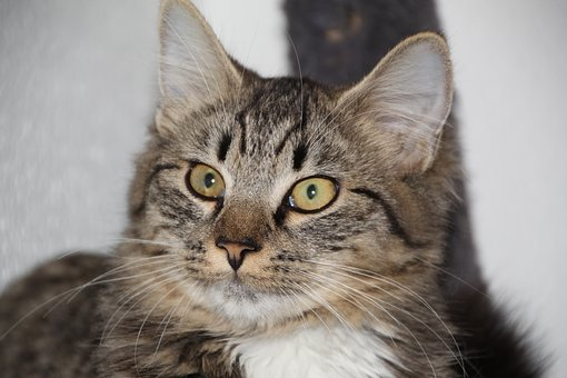 Cat, Cute, Kitten, Animals, Feline, Adorable, Kitty