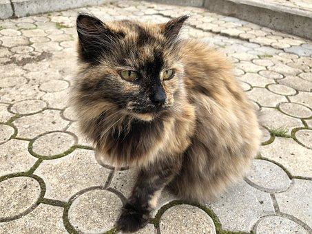 Cat, Stone, Posture, Feline, Animals, Cute, Predator