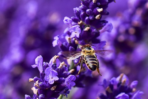 Bee, Flower, Insect, Macro, Summer, Nature