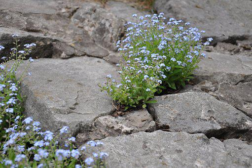 Flowers, Small Flowers, Blue Flowers