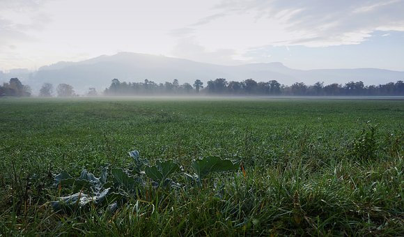 Morning, Field, Fog, Muenchen Stone, Kohl, Sunrise