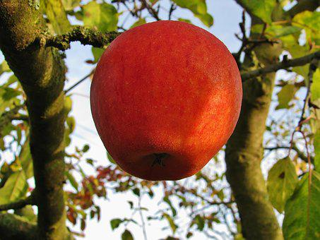 Apple, Fruit, Red, Autumn, Forget, The Last