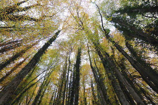 Forest, Autumn, Glade, Wide Angle, Trees, Color