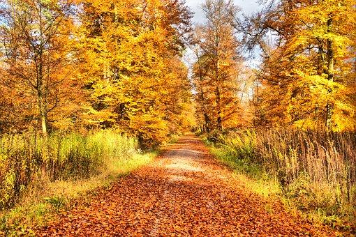 Autumn, Golden Autumn, Fall Foliage, Forest, Leaves
