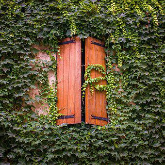 French Windows, Ivy, Greenery, Wooden Shutters