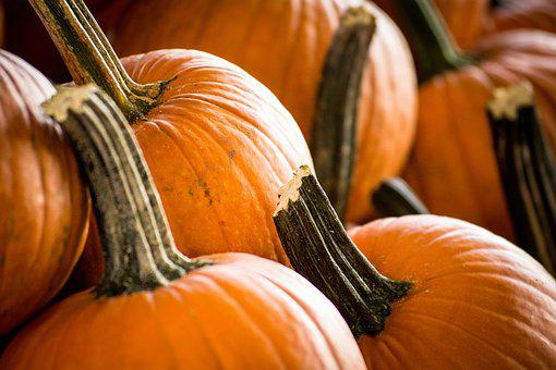 Pumpkin, Halloween, Thanksgiving, Pumpkin Patch