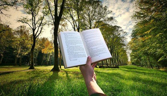 Book, Hand, Reading, Read, Sunset, Garden, Grass