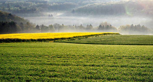 Landscape, Field Of Rapeseeds, Oilseed Rape, Haze