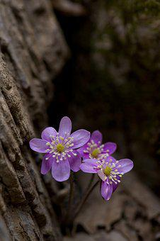 Pink Casino Day Return, Hepatica Flower, The Term Hell