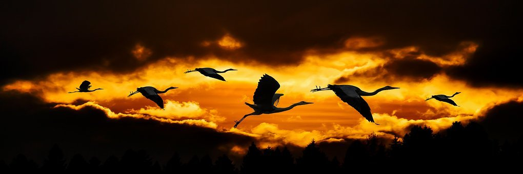 Nature, Sun, Clouds, Animals, Bird, Heron, Flying
