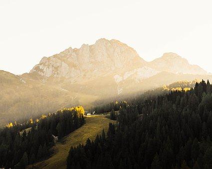 Nature, Trees, Autumn, Fall, Hiking