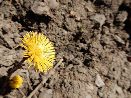 Yellow, Flower, Desert, Dry, Land, Hope, Life, Spring