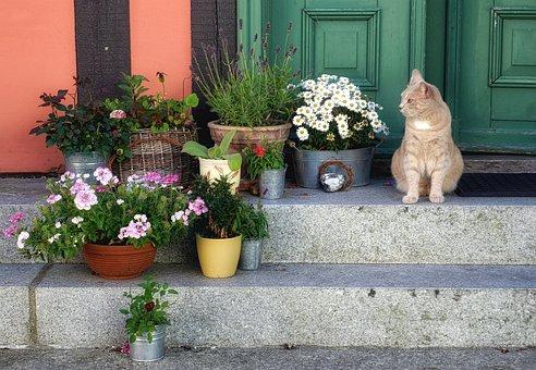 Cat, House, Input, Pet, Atmosphere