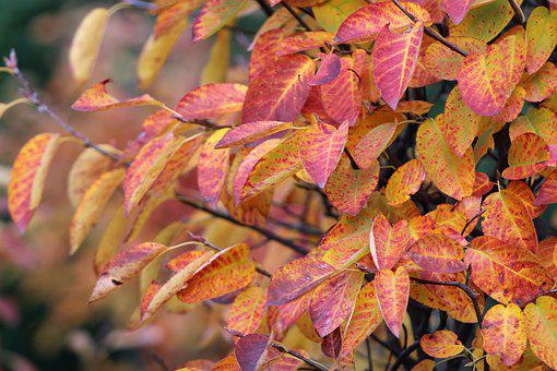 Leaves, Autumn, Mood, Fall Colors, Fall Foliage