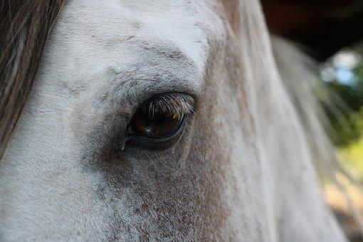 Horse, Eye, Head, White, Brown, Mane